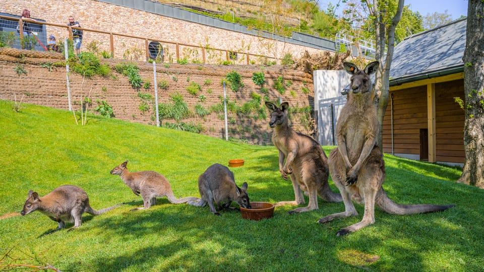 Foto: archivo Zoo  de Praga