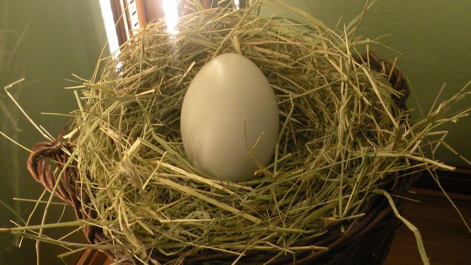 Huevo de oca,  foto: Dominika Bernáthová