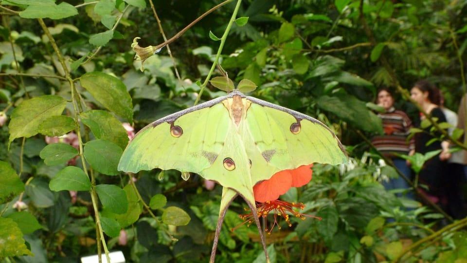 La belleza,  elegancia y fascinante fragilidad de las mariposas exóticas pueden apreciarse en el invernadero Fata Morgana en las instalaciones del Jardín Botánico de Praga. Este aňo pueden convertirse en testigos de su nacimiento y bailes…