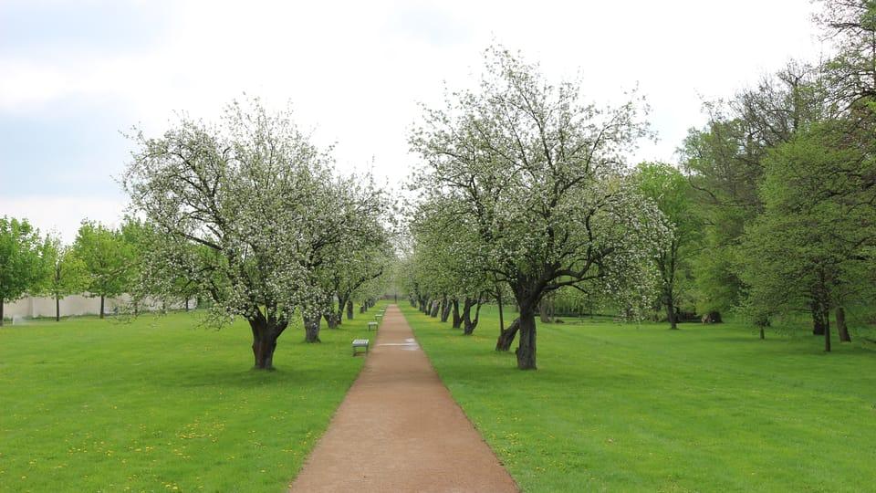 Los manzanos del parque palaciego,  foto: Dominika Bernáthová