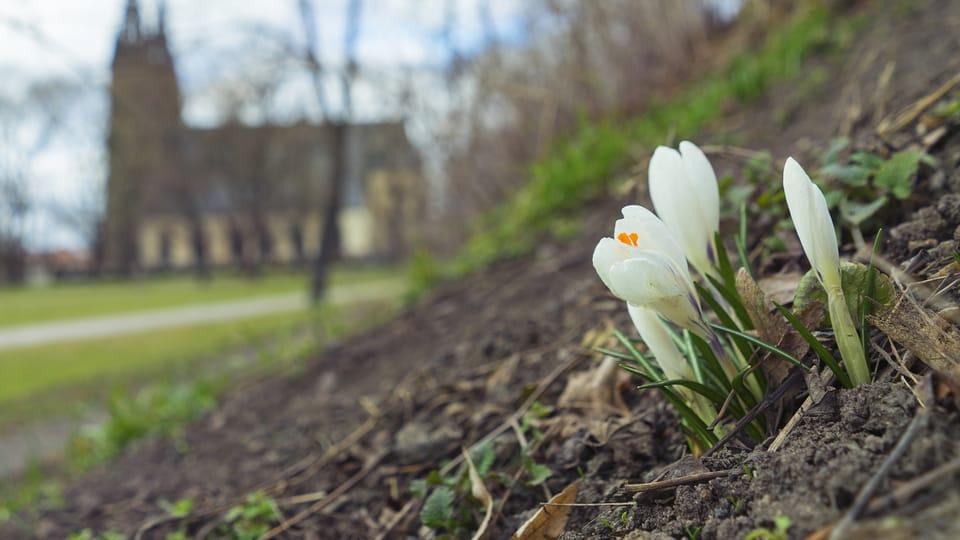 ¡Por fin ha llegado la primavera a la República Checa!  Esta vez les ofrecemos una romántica vista primaveral de la colina praguense de Vyšehrad. Foto: Jakub Linhart