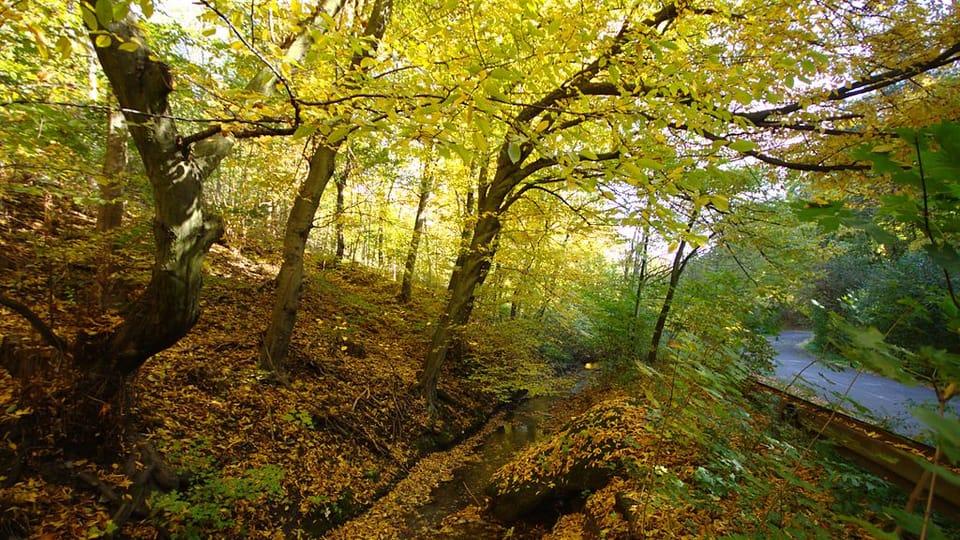 Prokopské údolí,  foto: Aktron,  CC BY 3.0