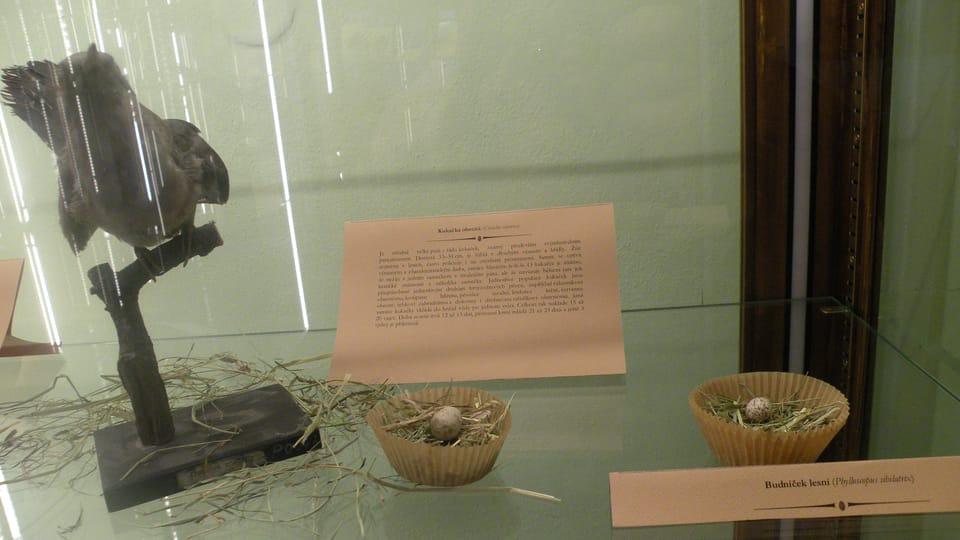 La Exposición del Huevo,  foto: Dominika Bernáthová
