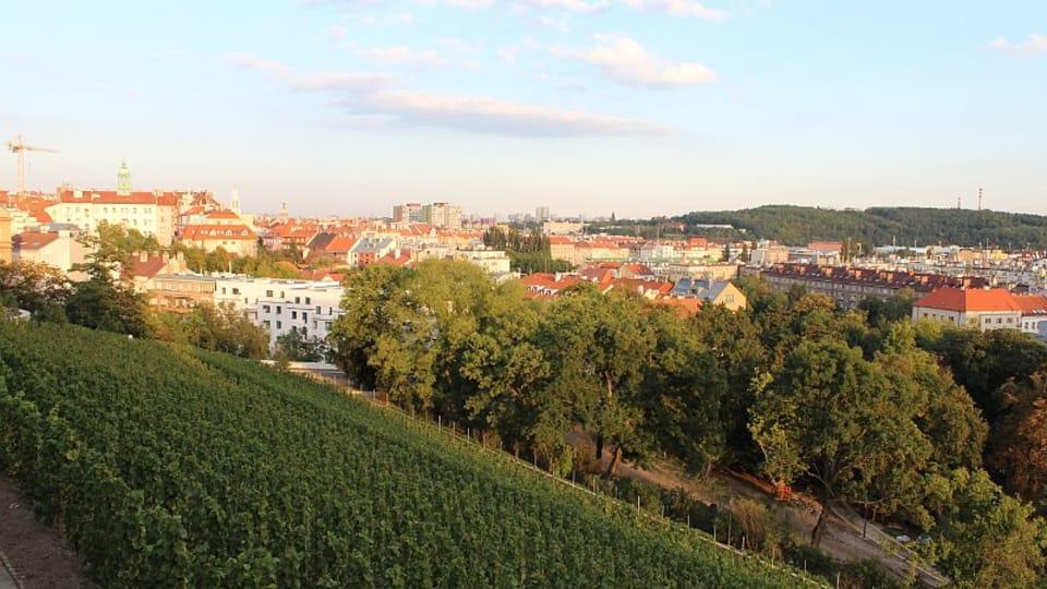 La viña de Grébovka,  foto: Anna Královcová