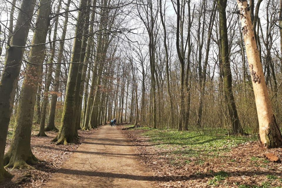Paseo primaveral por la colina Říp   Foto: Lenka Žižková,  Radio Prague International